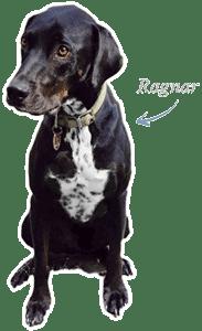Earl Ragnar, der Bürohund